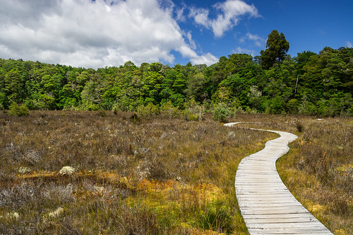 Kettle Bog on the Kepler Track, Fiordland, New Zealand