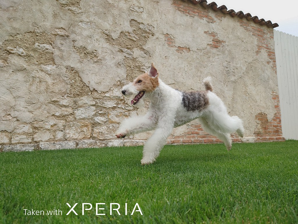圖說一、Xperia 1 II為全球首款具備動物眼即時眼部追蹤對焦功能的手機,為拍攝寵物而生!(3)
