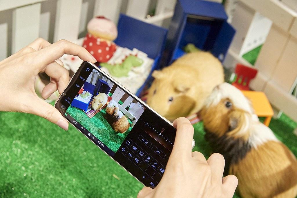 圖說三、Xperia 1 II帶來動物眼即時眼部追蹤對焦功能,搭配高速連拍,輕鬆拍下寵物玩耍的瞬間,甚至連毛流都能清晰捕捉!(3)
