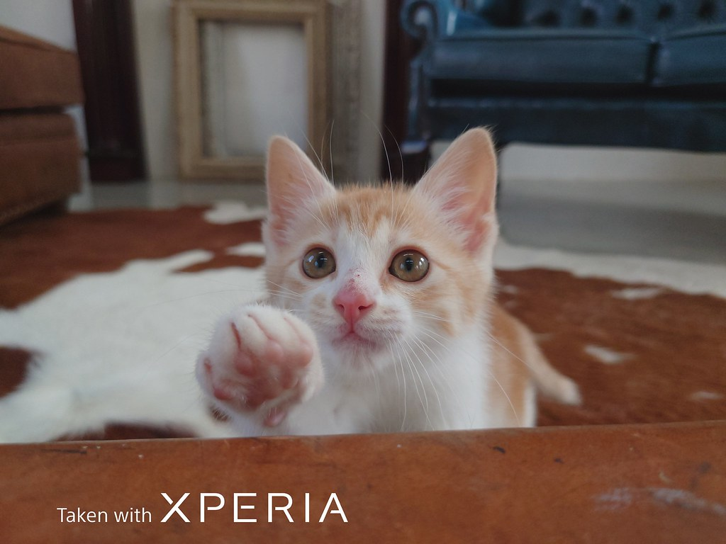 圖說一、Xperia 1 II為全球首款具備動物眼即時眼部追蹤對焦功能的手機,為拍攝寵物而生!(2)
