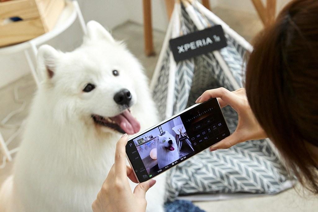 圖說三、Xperia 1 II帶來動物眼即時眼部追蹤對焦功能,搭配高速連拍,輕鬆拍下寵物玩耍的瞬間,甚至連毛流都能清晰捕捉!(1)