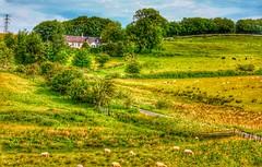 Photo of Rural scene.