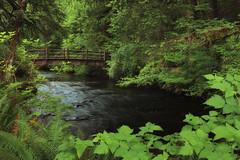 Spanning Silver Creek