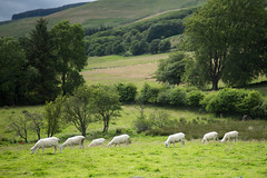 Photo of Flock behaviour