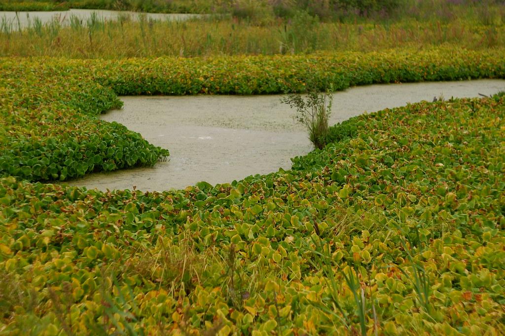 фото: Позднее лето на болоте