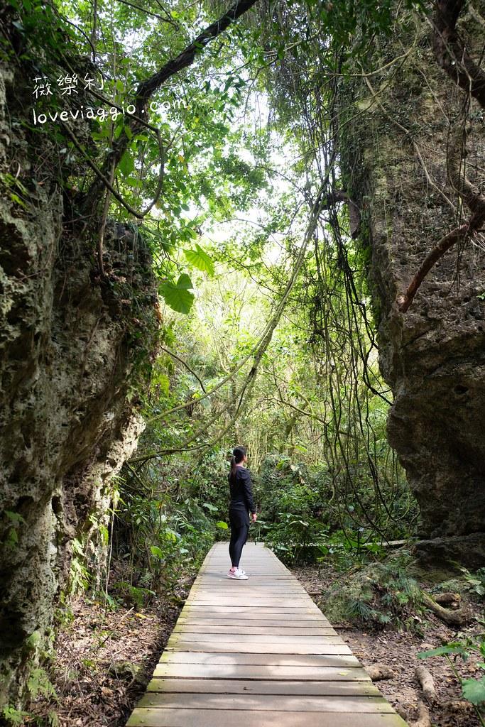 【高雄 Kaohsiung】嘆為觀止的秘境柴山天雨洞 壽山盤榕登山步道 @薇樂莉 Love Viaggio | 旅行.生活.攝影