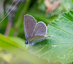 White Hill 02.08.20 Small Blue-1