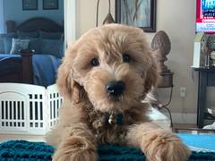 Hi I'm Clancy (Kizzie & Richie)