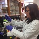 Borlaug Fellow Maria Cazar in the Xie Lab