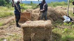 Hay making by members of APWOLIM association in Limonade