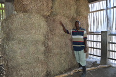 Décius Jean Gilles with his stock of 16 tons of hay, enough to feed 50 heads of cattle for 51 days