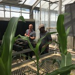 Borlaug Fellow Hamilton in the greenhouse with USDA-FAS during campus visit