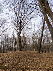 Effigy Mounds National Monument