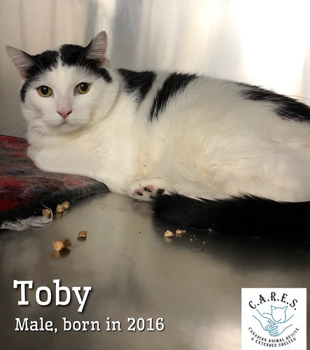 TOBY     Male   4 years