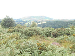 Photo of Stiperstones, Shrops. View to Corndon Hill.