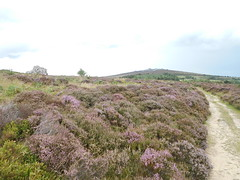 Photo of Stiperstones, Shrops. Near to Nipstone Rock.