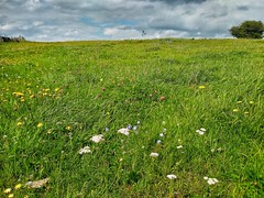 Photo of Field with a few wildflowers