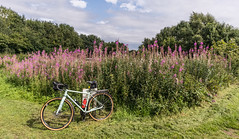 Photo of Bike ride on the Bridgewater Canal towpath, near Lymm