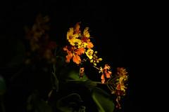 Blüten fließend