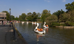 Photo of Swans Cannon Hill Park