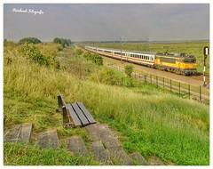 Nederlandse Spoorwegen 1752 IC Berlijn  ( Alsthom Nez Cassé) Lelystad Oostvaardersplassen ( NL)
