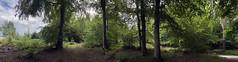 Photo of den woods