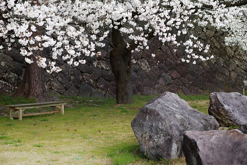 Stones, Stone wall and Cherry Blossoms