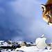 Nueva guerra fría y muro tecnológico, inteligencia artificial, big data