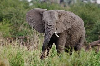 World Elephant Day, August 12, 2020