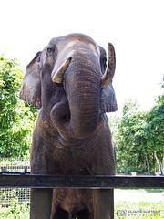 190709-41 Éléphant (2019 Trip)