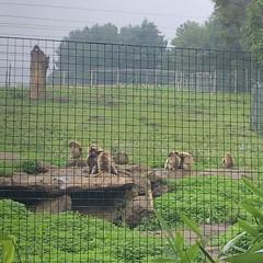 Photo of Edinburgh Zoo, Edinburgh, Scotland - Tuesday 11th August 2020