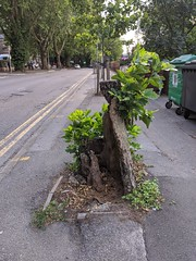 Photo of Reading - a very persistent tree
