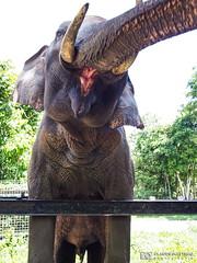 190709-40 Éléphant (2019 Trip)