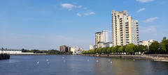 Photo of 13th August 2020, Socially Distanced Swans, Salford Quays, Greater Manchester