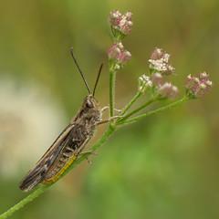 Photo of Grasshopper..........