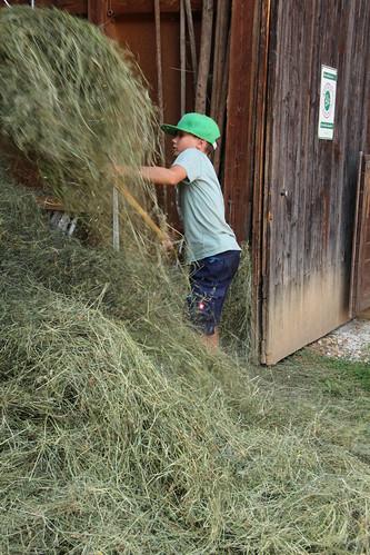 Heuarbeit ist keine Kinderarbeit :-)