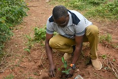 Partner from Nothern Development planting a tree