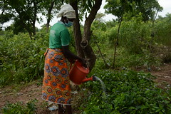 Elizabeth watering some of the seedlings