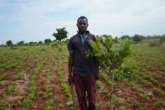 David in his field