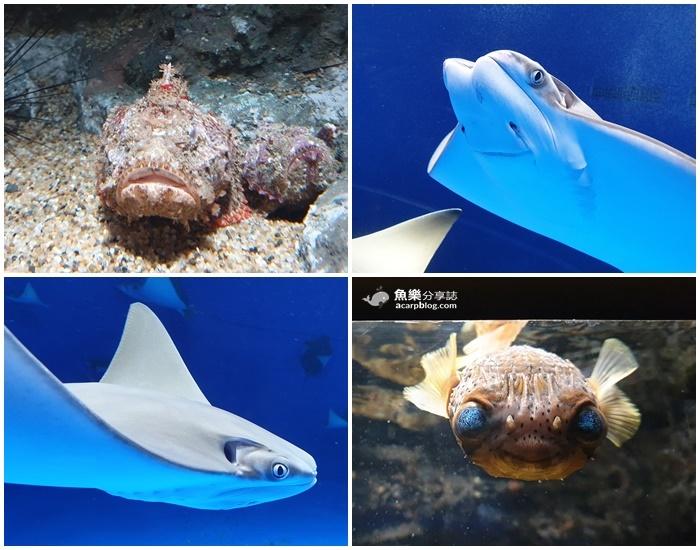 【桃園中壢】Xpark水族館必逛重點整理|交通資訊、票價、訂票資訊 @魚樂分享誌