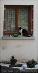 Chat la fenêtre