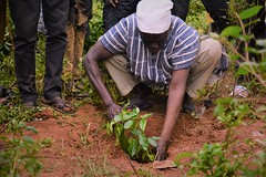 Chief of Jagrido planting a tree