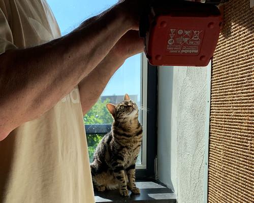 Lola the Supervisor