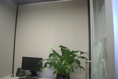 Serenity Panel In small office