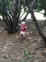 "Sam at Morton Arboretum • <a style=""font-size:0.8em;"" href=""http://www.flickr.com/photos/109120354@N07/50251823903/"" target=""_blank"">View on Flickr</a>"