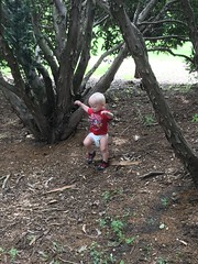 "Sam at Morton Arboretum • <a style=""font-size:0.8em;"" href=""http://www.flickr.com/photos/109120354@N07/50251824563/"" target=""_blank"">View on Flickr</a>"