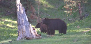 13-2_bears