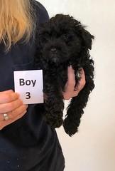 Baylee Boy 3 8-1