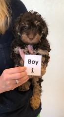 Baylee Boy 1 8-1