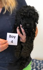 Baylee Boy 4 8-1